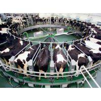 甘肃宾利达专业生产转盘式挤奶机厂家订做,转盘式挤奶机价格,