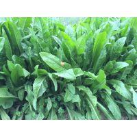 贵州牧草种子购买,农科院指定牧草种子供应商,哥利盛种业