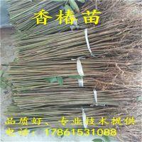 http://himg.china.cn/1/4_506_235798_800_800.jpg