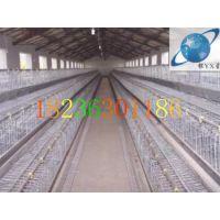 阶梯式蛋鸡笼丨蛋鸡养殖笼丨高档笼具丨优质镀锌鸡笼【银星】