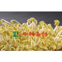 吉林新式全自动豆芽机,大型豆芽机厂家价格