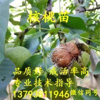 http://himg.china.cn/1/4_511_237924_800_800.jpg