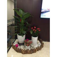 植物租赁 室内办公室植物租赁 室内植物造景 室内景观