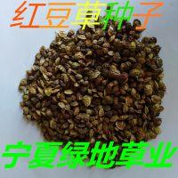 批发牧草种子【红豆草种子】草坪种子 量大从优 绿化固沙