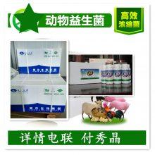 猪饲料添加剂厂家供应猪用益生菌