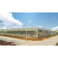 宁夏中药扶贫温室大棚16MM钢化玻璃墙体、高效采光型建造单位