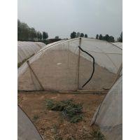 供应蝗虫 蜜蜂养殖网厚度厚大丝 韧性好 防老化