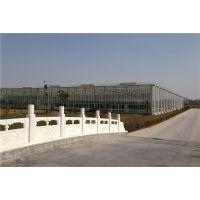 江苏常州绿色蔬菜种植大棚温室玻璃架构型项目整体报价