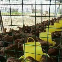 万泰菜园栅栏网 养殖铁丝网 养鸡防护护栏