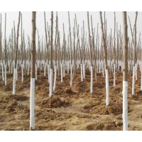 北京冬季树木涂白,树干涂白剂