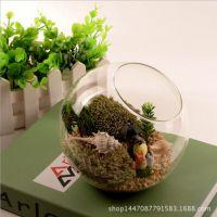 微景观 大中小号 斜口玻璃瓶 苔藓多肉微景观DIY造景生态瓶微景观