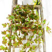 东莞浩晟工艺大壁挂爬山虎 白番茨叶 黄番茨叶 仿真植物壁挂挂在墙上真的好看吗?