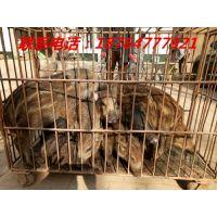 http://himg.china.cn/1/4_532_236252_500_375.jpg