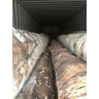 金威木业***新稳定月供50柜爱沙尼亚、拉脱维亚进口桦木原木AB级/ABC级 桦木家居专用木材 原木批发