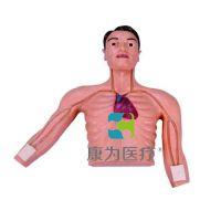"""""""康为医疗""""PICC介入训练模型KDF/L69E,PICC介入,静脉介入"""