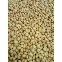 供应枸橘苗 货源充足 成活率高