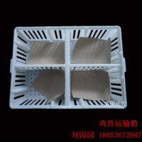 鸡苗运输箱 周转笼 中间带隔板的苗筐 厂家生产