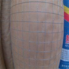1.2米电焊网 建筑网片 镀锌网片
