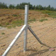刺丝护栏网 刺绳钢丝网 刺绳杆