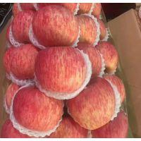 哪里有果农冷库直销处 红富士苹果苹果批发