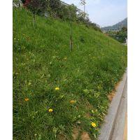 出售重庆绿化野花组合花种品种有哪些