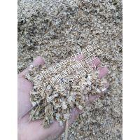亳州市智丰药材专业合作社大量供应优质纯新白芷种子,本品发芽率高,纯度高,基地培育,质量保证。