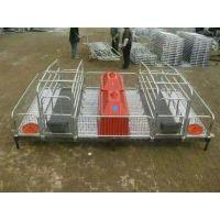 河北腾诚批发养猪设备母猪产床 母猪产床多少钱一套
