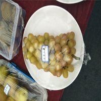 哪里有2公分葡萄苗 2年葡萄树苗出售
