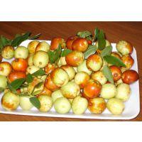 山东鲜枣代购鲜大枣、脆枣、冬枣、大梨枣等各种枣
