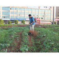 小型旋耕松土机 汽油动力背负式除草机 大棚果园用割草机