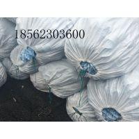 http://himg.china.cn/1/4_555_235676_800_600.jpg