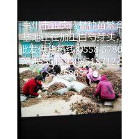 亳州市谯城区正庆中药材种植专业合作社