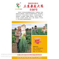 供应河北时丰农业科技开发有限公司杂交大葱新品种(三系杂交青杂2号大葱)
