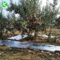 供应山东苹果反光膜果树反光膜(果树增色专用) 超高亮度反光膜