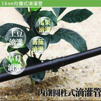 湛江火龙果膜下滴灌种植技术安装指导农业生产
