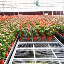 温室花卉种植-观光农业-邂逅一场浪漫花海-风里雨里华耀等你