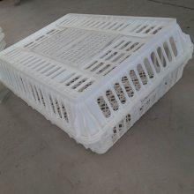 塑料运鸡筐 运输鸡笼 塑料鸡笼 25高毛鸡筐厂家