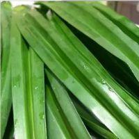 泰国新鲜香兰叶 班兰叶 斑兰叶 斑斓叶 新鲜香料500g