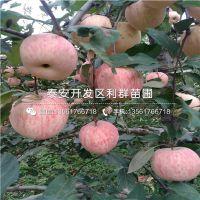 http://himg.china.cn/1/4_564_240732_400_400.jpg