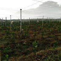 厂家现货直销各种果树防虫网支持定做结实耐用质量好