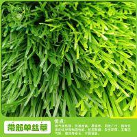 供应优质人造草坪钻石草LTLDS503-2C