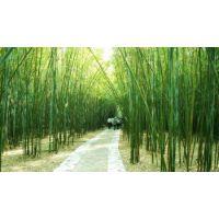 北京本地栽培竹子,成活率高,适应北方环境竹子,送货