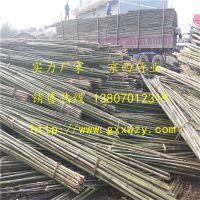 厂家直销大量供应2018年山地苹果项目专用4米小竹竿
