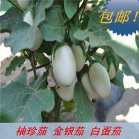 袖珍茄子种子 白蛋茄 挂果多 金银茄鸡蛋茄种子观赏期长 包邮