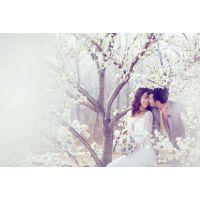 【大兵映像热荐】郑州婚纱摄影前十名婚纱照哪家拍的好一般多少钱