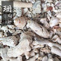 博淼厂家直销水族馆用珊瑚砂 鱼缸污水处理用珊瑚沙 族景观用珊 瑚沙