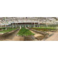 小型植物工厂