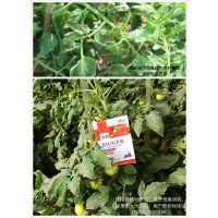 碧格草莓专用进口有机蛋白液肥 草莓增产专用