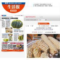 玉米分类需改革,玉米不仅是粮食,玉米也能当水果吃!广西现代立新超甜鲜食白金玉米全国推广