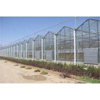 高质量防腐性强的连栋玻璃温室大棚骨架加工厂家